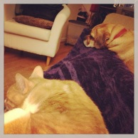 Snuggles with the pets while I watched the Tony's.