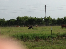 The view outside my office. Hello, Texas : )